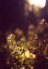 :) (seyed mostafa zamani) Tags: life light sun plant abstract flower color nature colors beautiful beauty dance juicy colorful paradise iran general bokeh good earth calm east concept wish conceptual boke  easement  sense latif exhilaration      nasim    coquetry