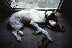 / Old dog (Seagull M) Tags: old dog sleep