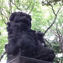 山王熊野神社は阿吽とも子供二匹連れ