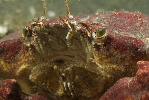 Crab mouth detail by Ken Bondy