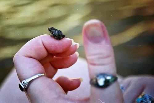 Micro Frog
