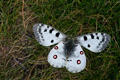 "2011_634076 - Butterfly • <a style=""font-size:0.8em;"" href=""http://www.flickr.com/photos/84668659@N00/6115749567/"" target=""_blank"">View on Flickr</a>"