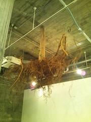 天井から根っこ-横浜トリエンナーレ2011の写真