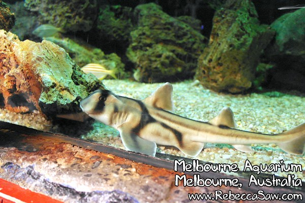 MELBOURNE AQUARIUM-38