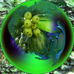 Fruit for the dragon........ September 7, 2011 (gailpiland) Tags: blue green leaves fruit ball holly sphere sensational fractal bubblesphere incendia top20greenish gailpiland mygearandme