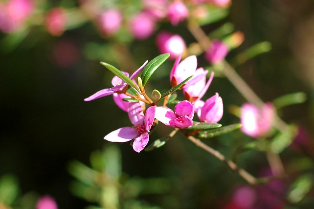春天来了花会开 - 艾小柯 - 流浪者的乡愁