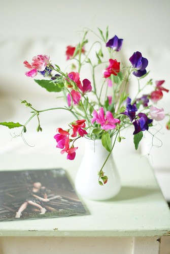 splendid sweet peas by wood & wool stool