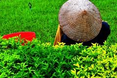 Anonymous Gardener (Araleya) Tags: life people work nikon asia southeast nikkor laos vientiane streetshot araleya d5000 ประตูชัย gardenerpeople