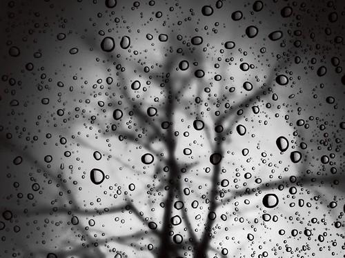79/365- Obscure by elineart