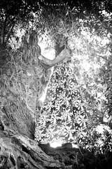 El erizo (Pizanlof) Tags: new city travel portrait people bw espaa color cute art me canon landscape photography photo spain nikon colours foto photos bonito paisaje colores fotografia artistica patty viajar pizanlof