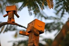 Amazon Danbo (Von | Morenberg) Tags: dan toy amazon danbo revoltech danboard danboo amazondanbo ravenrulez