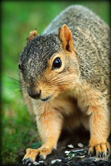 Thanks for the snack, now please leave! (grillheather) Tags: park ohio tree cute squirrel critter adorable seeds snack mauthe blackoilsunflower