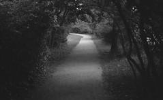 Path (jboberg) Tags: leica b trees light white black grass analog shadows bend path trix hc110 unknown bushes leading gravel bwfp