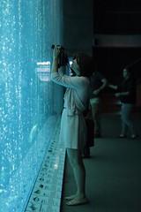 ocean wall aquarium bay monterey women photographer open tank bubble