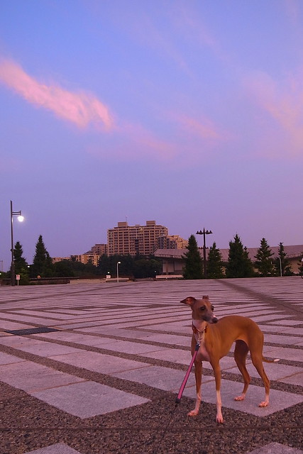 Magic hour