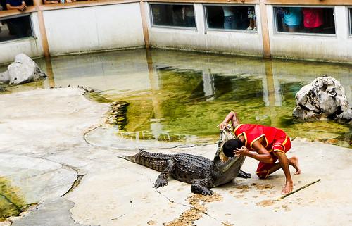 Crocodile Farm :: Head inside crocodile mouth