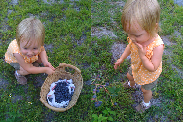 2011_0520_Blueberries10.jpg