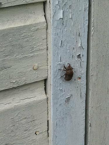 Huge bug! Eeek!