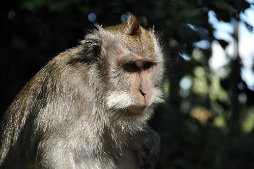 Monkey forest #2