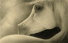 looking back  (Explored) (Artist Victoria Watson) Tags: horses pencil fineart drawings arabianhorse horsehead graphite whitehorse animalart petportraits horsedrawings pencildrawings arabianhorses explored horseart horsedrawing equineart horseportraits whitearabian petdrawings whitearabianhorse artworkbyhand arabianhorseart arabianhorsedrawing striaghtegyptionarabian horsepencildrawings horsesinpencil horsesingraphtie