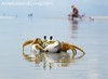 Crab Reflection, Amelia Island, Florida