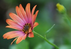 Havin'a lovely summer day... (Evelyn  NL) Tags: flowers summer flower holland nederland zomer bloemen bloem