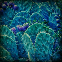 Prickly Things (PCsAHoot - Dipping toes in...) Tags: cactus texture nature artdigital awardtree magicunicornverybest sbfmasterpiece exoticimage