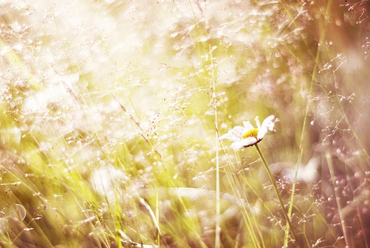 Blomjaevel