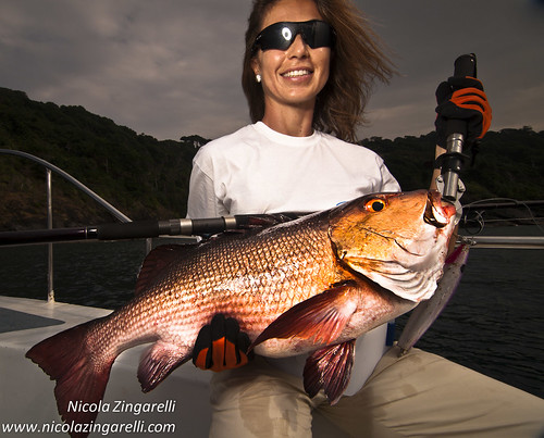 Andaman Islands, India. Red Snapper (Lutjanus bohar) caught with a stickbait. SB800 through Orbis Ring Flash by Nicola Zingarelli