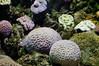 cerveau (auchat) Tags: water plante aquarium agua nikon eau cerveau aquatique cervelle biarrtiz planteaquatique d5000