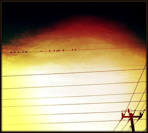 64/365- Lines and birds by elineart