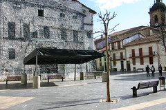 En la plaza Cardenal Orbe, los arboles podados.