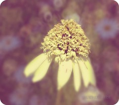 Oh Happy Day! (Heather Annee Photography) Tags: flowers light summer hot nature yellow garden walking nikon natural bokeh heather indiana sunny pastels 500mm newlens naturallighting d90