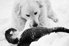 Cat vs Dog (Norbert Králik) Tags: dog cat catvsdog canoneos5d canonef100mmf28macrousm