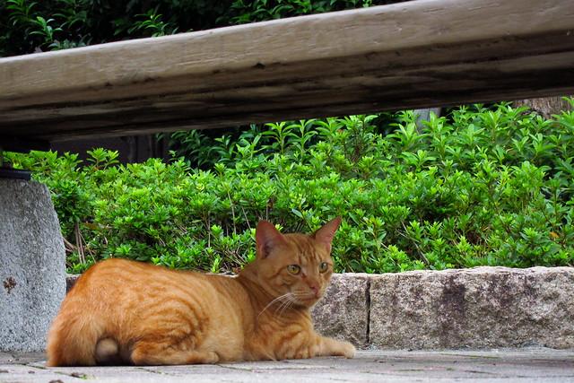 Today's Cat@2011-09-02