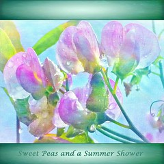 Sweet Peas and a Summer Shower (virtually_supine popping in and out) Tags: flowers painterly square droplets naturallight manipulation textures layers legacy backlighting tistheseason sweetpeas ourdream magicpix awardtree tatot sbfmasterpiece pse9