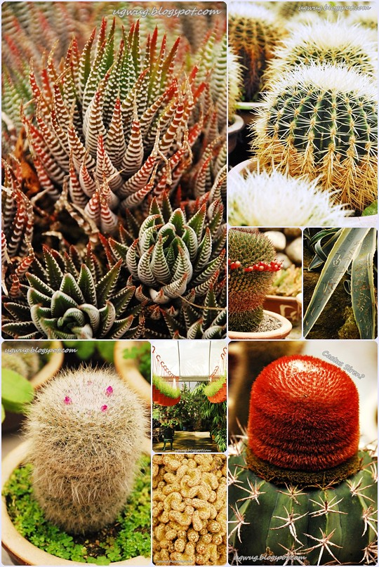 Cactus Farm