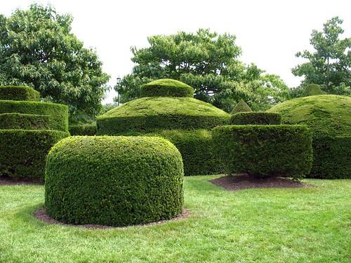 topiary craziness