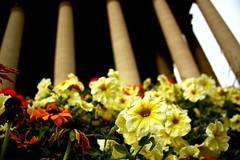 La Madeleine (Kennedy Lugo) Tags: flowers paris france church up yellow closeup temple roman columns iglesia chiesa upshot lamadeleine