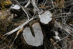 Tree Stumps (Matt Peoples) Tags: tree stump