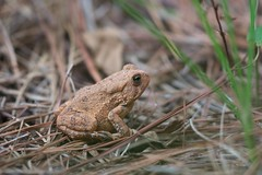 toad (hynkle) Tags: alabama toad camphill grandnonies