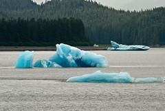 Icebergs - they really are this blue! (Will Stead) Tags: birthday cruise usa ice alaska 40 iceberg insidepassage volendam hollandamerica