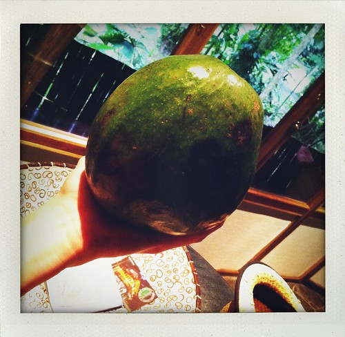 Costa Rica 2011: Biggest & Yummiest Avocado Ever by Sanctuary-Studio