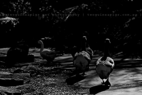 Troupers by twoguineapigs pet photography | bird photography