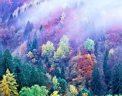 [Free Image] Nature / Landscape, Forest, Fog / Mist, Autumn Leaf Color, 201109191900
