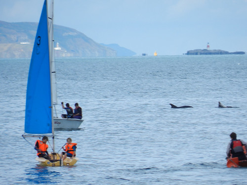 Saturday afternoon in Bray harbour - dolphin spotting