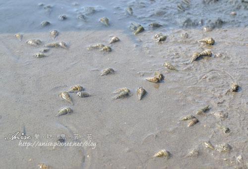 馬蹄蛤028拷貝.jpg