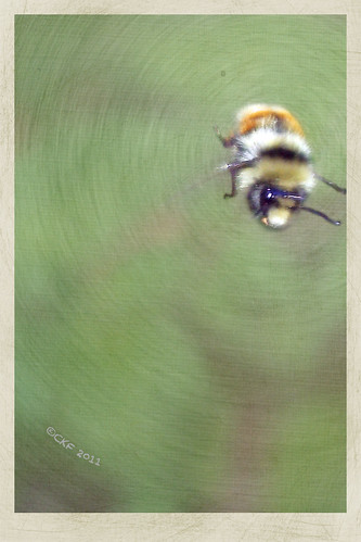 Bee in a Whirlwind