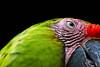 At a parrot's glance. (pattoise) Tags: mygearandme mygearandmepremium mygearandmebronze mygearandmesilver mygearandmegold mygearandmeplatinum mygearandmediamond gearandmebronze