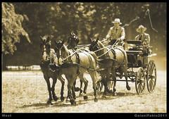 West (Gaiani Fabio) Tags: bn carrozza cavalli calesse